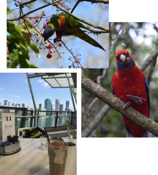 鳥やカフェの写真